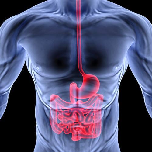 Propiedades interesantes del sistema digestivo